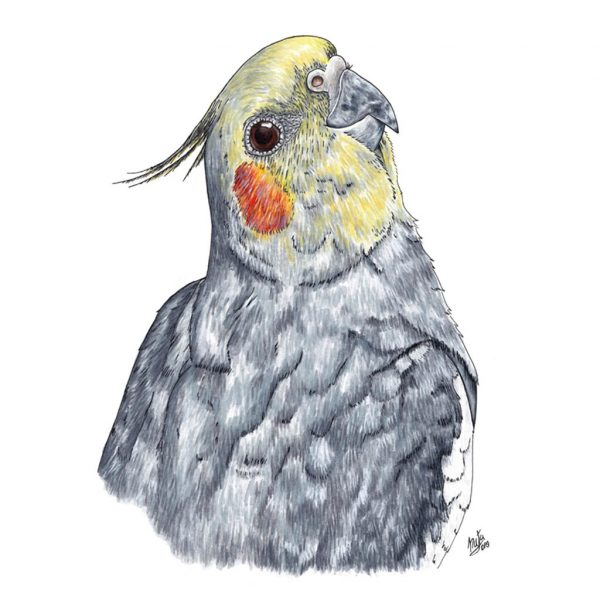 retrato ninfa ejemplo natadpb ilustracion